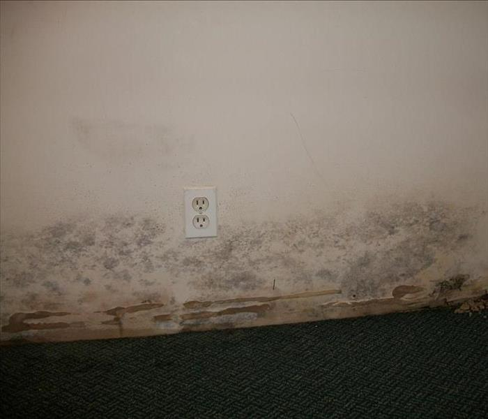 Mold Found in Clifton NJ Home